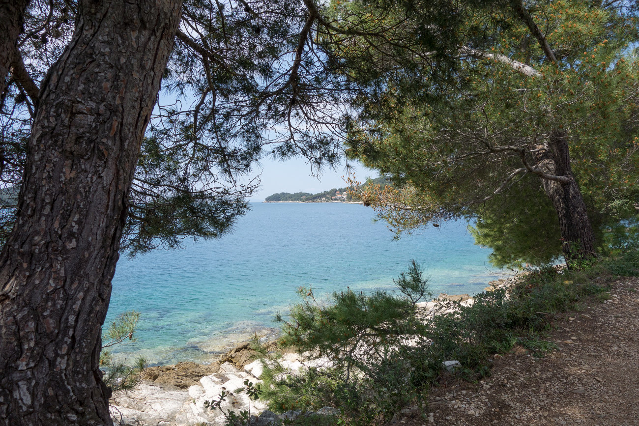Seaside walk, shaded, pine trees, turquoise water, rocky shore